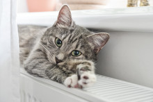 Cat Relaxing On The Warm Radiator