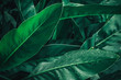 canvas print picture - Large foliage of tropical leaf in dark green with rain water drop texture,  abstract nature background