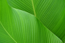 Tropical Leaf Texture Background