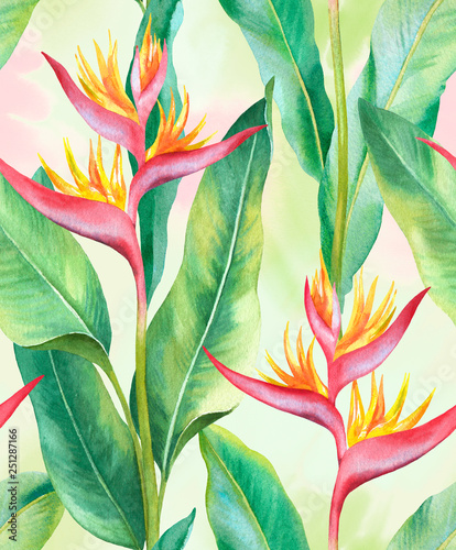Fototapeta Watercolor heliconia flower. Hand painted seamless pattern design obraz