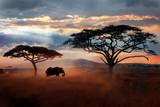 Dziki słoń afrykański na sawannie. Park Narodowy Serengeti. Dzika przyroda Tanzanii. Afrykański krajobraz.