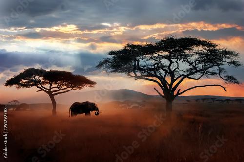 Dziki słoń afrykański na sawannie. Park Narodowy Serengeti. Wildlife of Tanzania. Afrykański krajobraz.