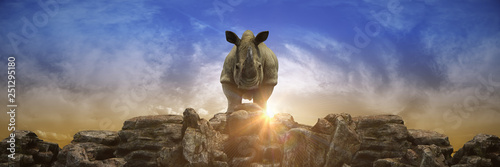 Fotografie, Obraz Rhino at sunset. 3d rendering