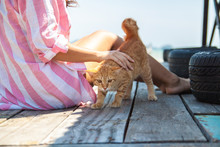 Person Hand Pats Ginger Cat. C...