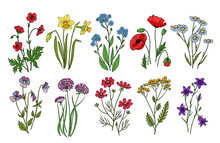 Wild Flowers. Meadow Plants Mo...