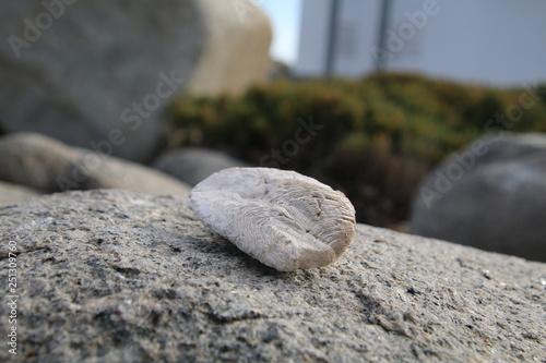 Photo sur Plexiglas Zen pierres a sable Jakobsbaai