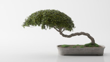 Beautiful Bonsai On A White Background