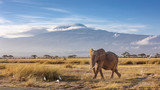 Fototapeta Sawanna - Elephant and Mount Kilimanjaro