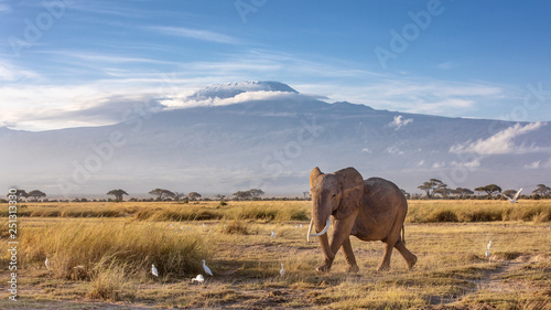 Deurstickers Olifant Elephant and Mount Kilimanjaro