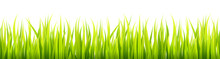 Bright Springtime Lawn Banner. Seamless Summer Or Spring Grass Decoration. Fresh Greenery Height.