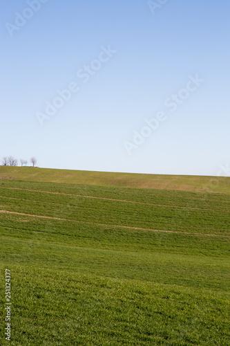 Fotografie, Obraz  Val D'Orcia Landscapes