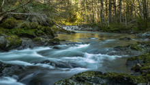 Rivers Bend - The Free Flowing North Fork Of The Siletz River. Oregon Coast Range.