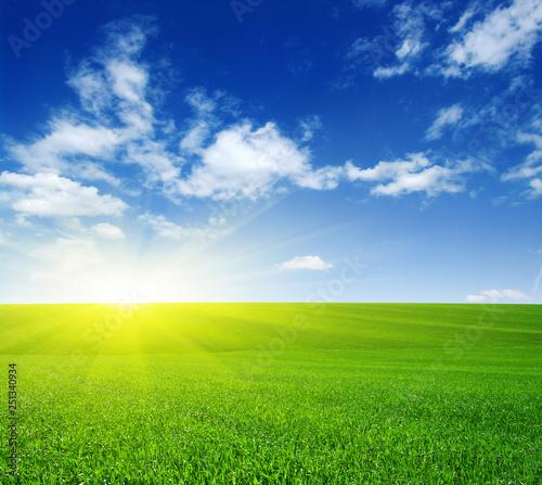 Spoed Fotobehang Weide, Moeras Green field and sun.