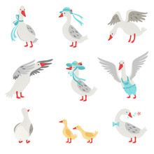 Collection Of Geese And Goslings In Different Situations, White Birds Cartoon Characters Vector Illustration