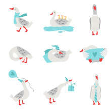 Collection Of White Geese In Different Situations, Cute Birds Cartoon Characters Vector Illustration