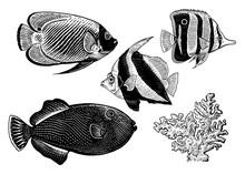 Set Of Decorative Aquarium Coral Fish.