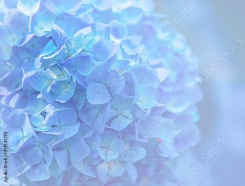 Montage in der Fensternische Hortensie hydrangea flowers close up