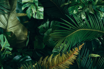 Fototapeta Liście Creative layout made of tropical leaves. Flat lay. Nature concept.