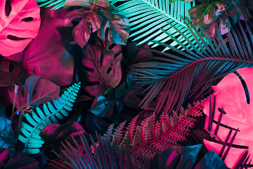 Fototapeta Abstrakcja Creative fluorescent color layout made of tropical leaves. Flat lay neon colors. Nature concept.