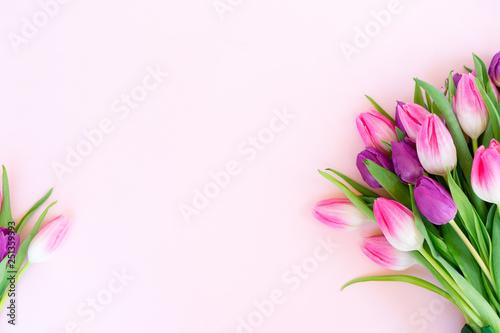 Różowe świeże tulipany