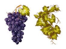 Grape And Leaf