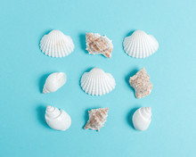 Creative Seashell Pattern On Pastel Blue Background. Summer Minimal Concept.
