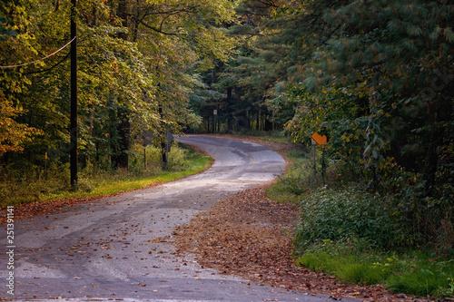 Fotografie, Obraz  Windy Woodsy Road
