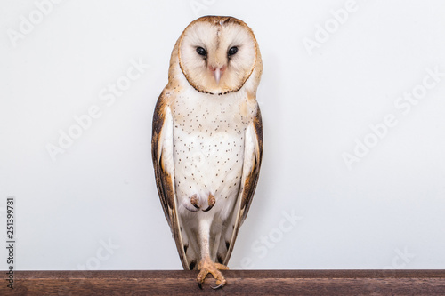 Foto op Aluminium Uil photo owl on white background isolated