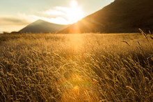 Sunset Over Mountains And Wheat Field