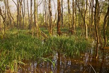 Swamps With Trees