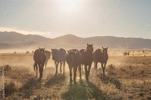 Spoed Foto op Canvas Wild Horses in the Utah Desert