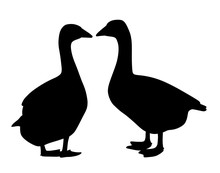 Two Geese Couple