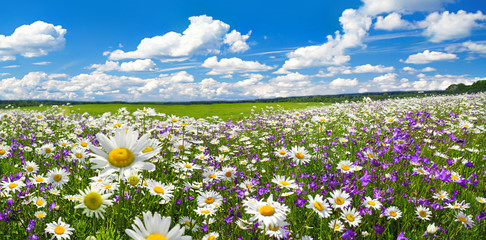spring landscape panorama with flowering flowers on meadow