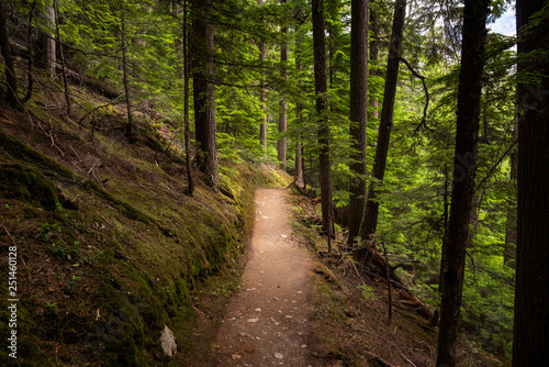 Fotografía Empty Unpaved Mountainside Trail through a Pine Forest on a Summer Day