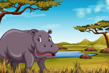 Hippopotamus In The Savanna Sc...