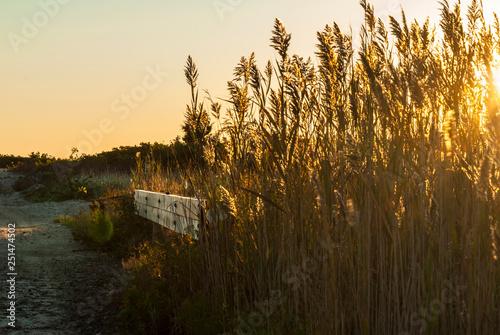 Fotografia, Obraz  Culvert near beach on Buzzards Bay