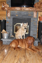 Dogs In Front Of Fireplace In ...