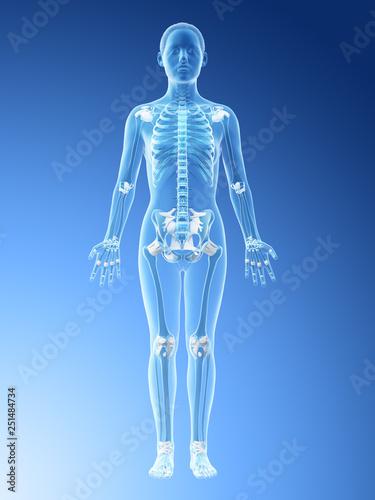 Fotografie, Obraz 3d rendered illustration of a females skeleton and ligaments