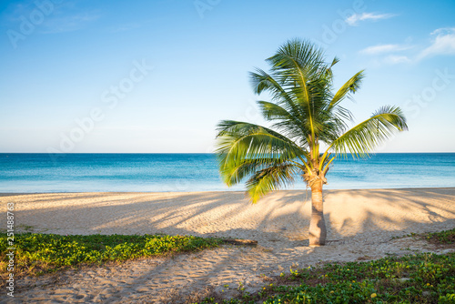 Tropical paradise beach with coconut palm tree in morning. Tropical summer beach holiday vacation traveling, resort hotel business concept.