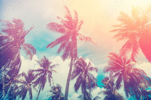 Valokuva  Copy space of tropical palm tree with sun light on sky background