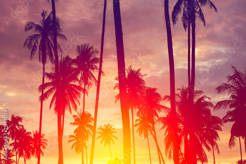 Stampa su Tela  Copy space of tropical palm tree with sun light on sky background