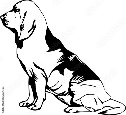 Photo Bloodhound Vector Illustration