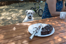 A Cute Dog Patiently Waiting For Some Cake.
