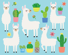 Cute Plain White Llamas Or Alp...