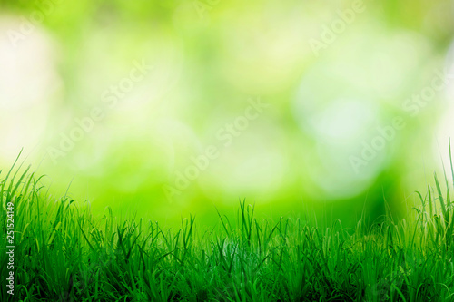 Photo sur Toile Herbe Green grass with bokeh blurred shining light abstract background, Bright color natural backdrop.