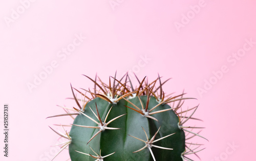 Türaufkleber Kakteen Green gymnocalycuim cactus on pastel pink background