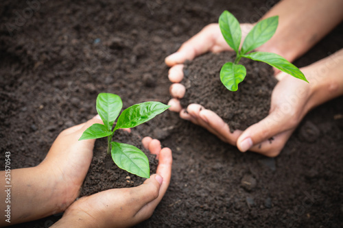 Fototapeta  The hands of adults and children holding green seedlings, Environment Earth Day In the hands of trees growing seedlings, reduce global warming, concept of love the world