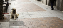 Abandoned Dog Street