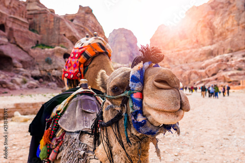 Fotobehang Kameel Close-up view of two beautiful camels in the Unesco World Heritage Site in Petra. Petra is a historical and archaeological city in southern Jordan.
