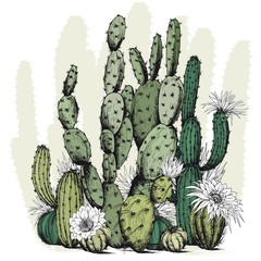 Fototapeta Egzotyczne Square card with green cactus plants and flowers. Hand drawn vector on white background.